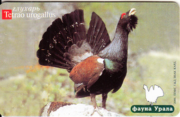 RUSSIA-URAL(Ekaterinburg)(chip) - Bird, Western Capercaillie(150 Units), Tirage 8500, Exp.date 30/04/01, Used - Russia