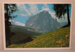 Val Gardena Sassolungo Cartolina 1996 - Italia