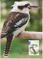 Australia 2013 Bush Babies,Kookaburra, Maximum Card - Maximum Cards