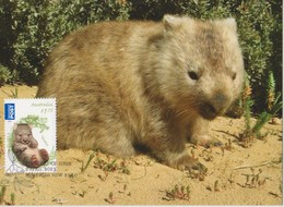 Australia 2013 Bush Babies,Wombat, Maximum Card - Maximum Cards