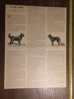DOCUMENT 1897 LES CHIENS DE BERGERS CONCOURS A ANGERVILLE - Old Paper