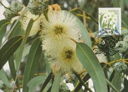 Australia 2014 Floral Emblems,Tasmanian Blue Gum, Maximum Card - Maximum Cards
