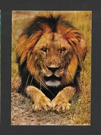 ANIMAUX - ANIMALS - HUMOUR - LIONS - EAST AFRICAN WILD LIFE - BY SAPRA STUDIO - Lions