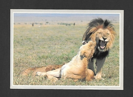 ANIMAUX - ANIMALS - HUMOUR - LIONS -  AFRICA WILD LIFE - PHOTO ANUP AND MANOJ SHAH - Lions