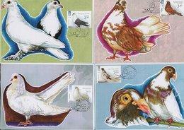 UKRAINE. Maxi Card. 4 Cards . FDC. Birds. Pigeons Fauna . KYIV. 2014 - Ukraine
