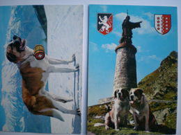 Italie > Val D'Aosta > Chien Du Saint Bernard - Italia