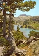 Espagne - Catalunya - Pirineu Catala - Vall D'Aran - Salardú Colomés Lago Largo - Escudo Oro 42 - 6113 - Lérida