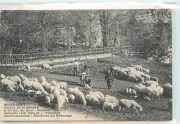 CPA 06 Alpes Maritimes Moulinet Vallée De La Bévéra à 50 Kil. De Nice Prairies Environnantes Moutons Au Paturage - Autres Communes