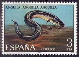 España. Spain. 1977. Fauna Hispanica. Peces. Fish. Anguila. Anguilla - Peces