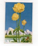 La Flore De Montagne Trolle D'Europe - Fleurs