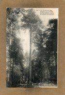 CPA - La JOUX (39) - Thème : Arbre - Aspect Du Président Des Sapins ( 50 M.) En 1912 - Altri Comuni