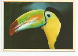 CP TOUCAN SULFURE (photo JM Dupuyoo) Jardins D'oiseaux Tropicaux - Uccelli