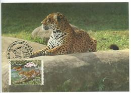 Jaguar Brèsil Carte Maximum 1984 Jaguar Brazil Brasil Maxicard - Big Cats (cats Of Prey)