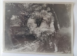 1918+1°GM FRONTE Del PIAVE-ESERCITO INGLESE SCUOLA MORTAI In TRINCEA Originale FOTO B/N-L754 - Krieg, Militär
