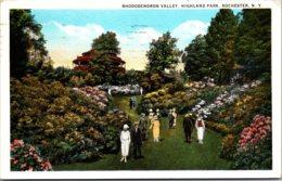 New York Rochester Highland Park Rhododendron Valley 1926 Curteich - Rochester