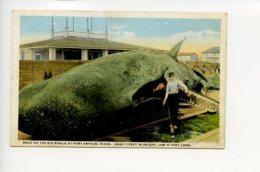 Piece D Antan - Etats Unis - Texas - Head Of The Big Whale At Port Arthur - Etats-Unis