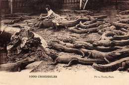 06-CAGNES-sur-MER-Jardin Zoologique Du Gros De Cagnes.1000 CROCODILES. - Cagnes-sur-Mer