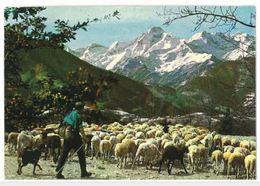 CP Transhumance Troupeau Moutons Saint Girons (09) - Saint Girons