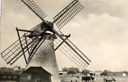 Rijnsburg, Hoop Doet Leven, Poldermolen, Windmill, Real Photo - Watermolens