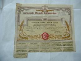 AZIONE CONSORZIO AGRARIO COOPERATIVO DI VARESE E CIRCONDARIO 100 AZIONI 1922 - Agricoltura