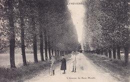 Trevieres L'avenue Du Beau Moulin - France