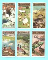 6 Figurine, Bilder, Chromos, Serie Komplett STOLLWERCK. Gruppe 467, Album 11. Thema: Vögel, Uccelli. - Stollwerck