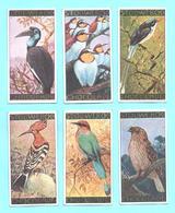 6 Figurine, Bilder, Chromos, Serie Komplett STOLLWERCK. Gruppe 281, Album 6. Thema: Vögel, Uccelli. - Stollwerck