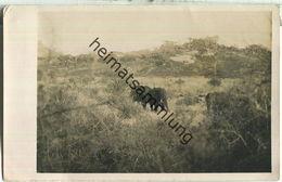 Uganda - Elefanten - Foto-AK - Oeganda