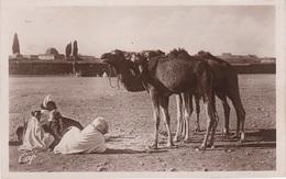 AK Scènes Types Les Chameaux Desert Bédouine Nomade Arabe Arab Arabien Afrique Africa Afrika Vintage Egypte Algerie ? - Afrique