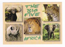 The Big Five African Buffalo Lion Léopard Rhinocéros Eléphant En 2000 - Éléphants