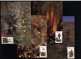 Transkei 1986 Aloes Maximumcards - Heilpflanzen