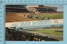 Montréal Quebec -Champ De Course Blue Bonnets, Animée+ Posté En 1974 +timbre CND -post Card Carte Postale - Montreal