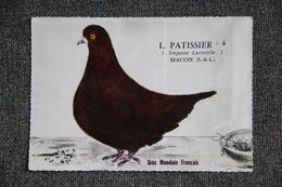 "MACON - L.PATISSIER, Pigeon "" GROS MONDAIN FRANCAIS"". - Macon"