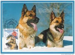 DOGS DOG - GERMAN SHEPHERD SCHÄFERHUND PASTOR PASTORE -  SWEDEN SUEDE SCHWEDEN 2001 MI 2218 MAXIMUM MAXI CARD CARTE - Dogs
