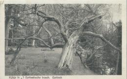 Eerbeek - Kijkje In 't Eerbeeksche Bosch - Uitg. Fa. L.H. Bosgoed - 1929 - Nederland