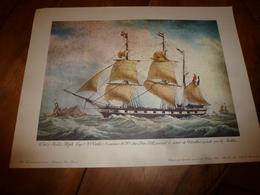 Trois Mâts ALFRED ,Capitaine Viale,au Détroit De Gibraltar, Pour ANTILLES (Portrait Navire  ,dim. Hors-tout = 48 X 36cm - Maritieme Decoratie