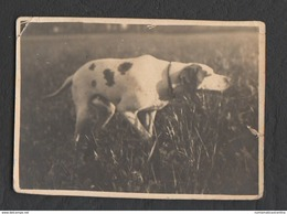 Cane Da Caccia Chasse Hunting Jagd  Breton - Foto