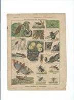 Les Animaux En Agriculture Insectes Etc Couverture Protège-cahier GODCHAUX  Bien + / - 1900s 3 Scans Texte Au Dos - Protège-cahiers