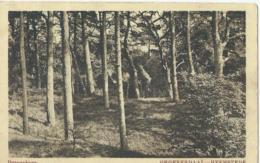 Groenendaal-Heemstede - Dennenberg - Uitg. W.H. V. Leeuwen - 1922 - Niederlande