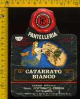 Etichetta Vino Liquore Catarrato Bianco 1975 Pantelleria - Etichette