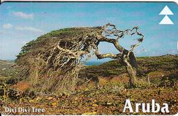 ARUBA(L&G) - Divi Divi Tree 2, CN : 609A, Used - Aruba