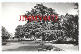 CPSM Dentelées - Le Cèdre Du Jardin Du Thabor En 1962 - RENNES 35 Ille Et Vilaine - Edit. ARTAUD N° 47 - Recto-Verso - Rennes