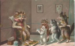 Kat - Chat - Cat - Katze - 1905 - Chats