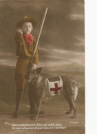 Jeune Scout Et Chien Berger Allemand Ambulancier Guerre 14 German Shepherd  Red Cross - Croix-Rouge