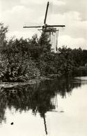 Zoeterwoude, Weipoort, Korenmolen, Windmill, Real Photo - Watermolens