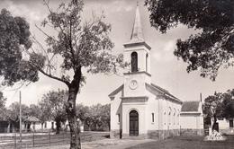 Algérie - Le Tarf : L'Eglise - CPSM Neuve - Autres Villes