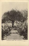 Southern Rhodesia, BULAWAYO, Lobengula's Indaba Tree (1920s) RPPC - Zimbabwe