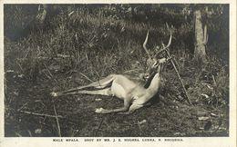 Northern Rhodesia, LUENA, Male Mpala Hunting Trophy Hunter (1920s) RPPC - Zimbabwe
