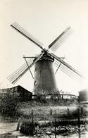 Oude Tonge, Korenmolen, Windmill, De Korenbloem, Real Photo - Watermolens