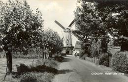 Ouddorp, Korenmolen, Windmill, De Hoop, Real Photo, Cyclist - Watermolens